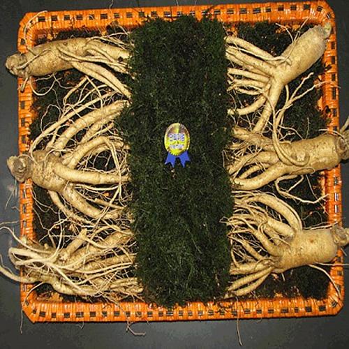 M [풍기] 산지직송 풍기수삼1.5kg/10~12뿌리(등바구니포장)