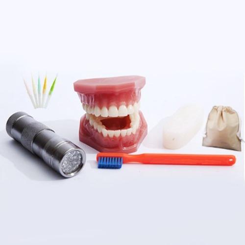 M HEALTH EDCO 치아치석 모형 78953 - 치아모형